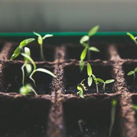 growing change unsplash 275