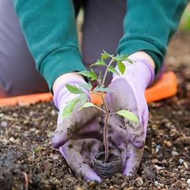 planting-garden-275px