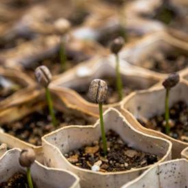 seeds blog 5