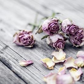 unsplash dead roses 275