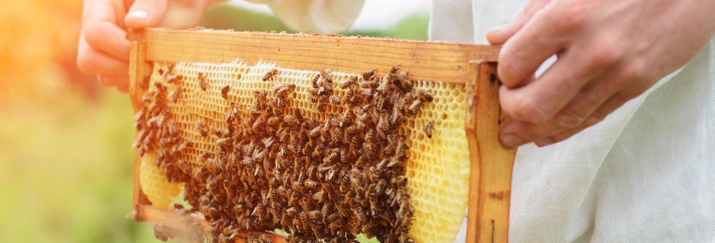 Beehive shelf