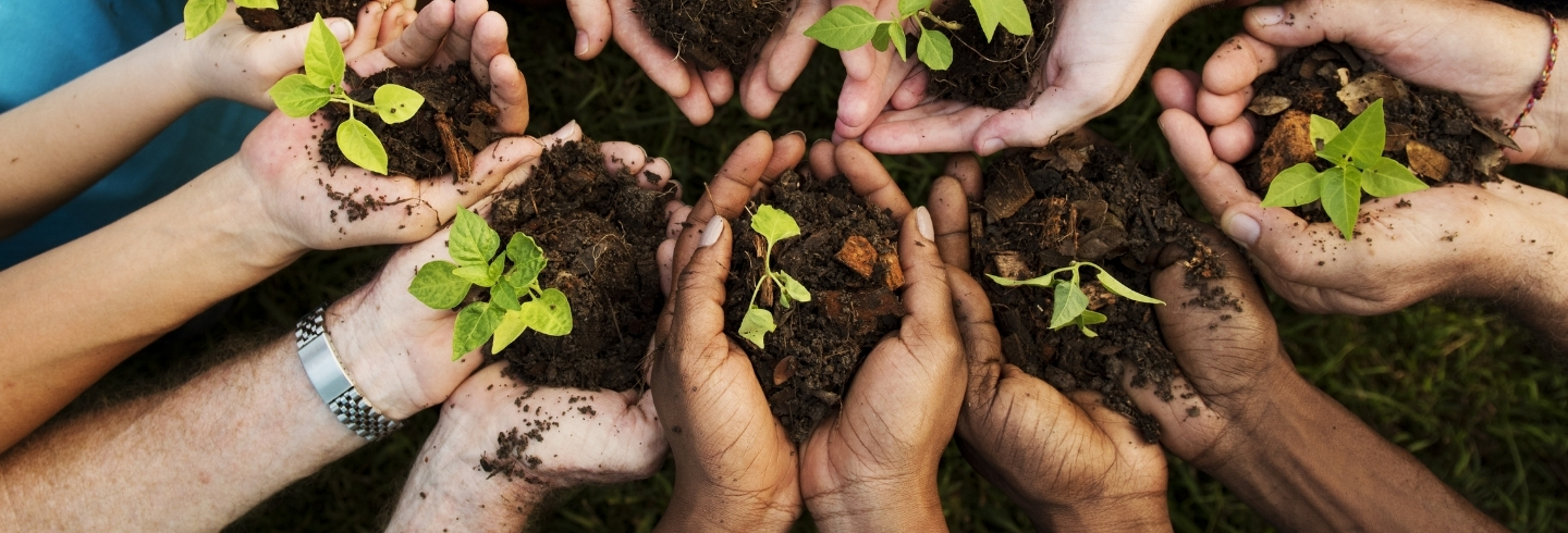 A group of people all holding tree saplings in their hands