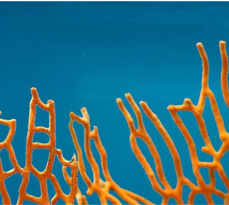 Orange coral 2