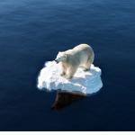 Polar 150x150