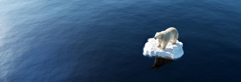 Polar bear on small ice cap
