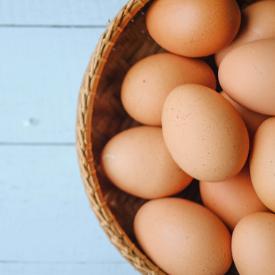 eggs-one-basket