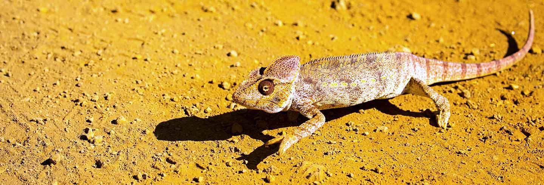 chameleon-hero