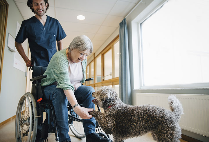 lady-in-wheelchair-shaking-dogs-paw 720