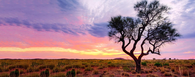 Australia bush fire home banner