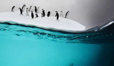 Penguins in a crowd