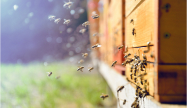 Bees and hive 380x220