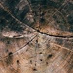 treerings-150px
