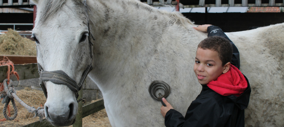 Jamie's Farm - Horse
